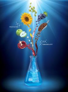 HMX_forDensity_Ingredients-Beaker_Composition_rev